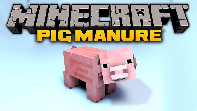 pig-manure-00